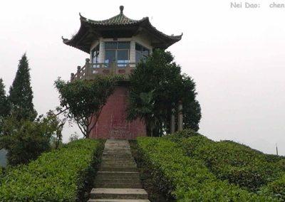 wudangshan 8 nemuritori plantatie ceai2 (1)